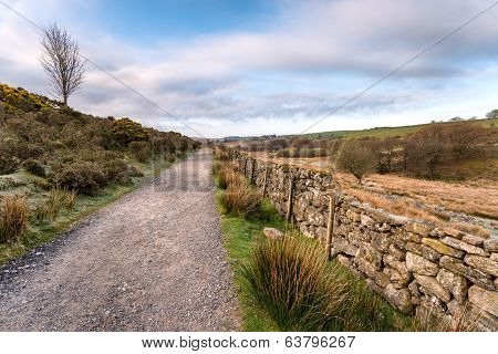 Country Lane In Dartmoor