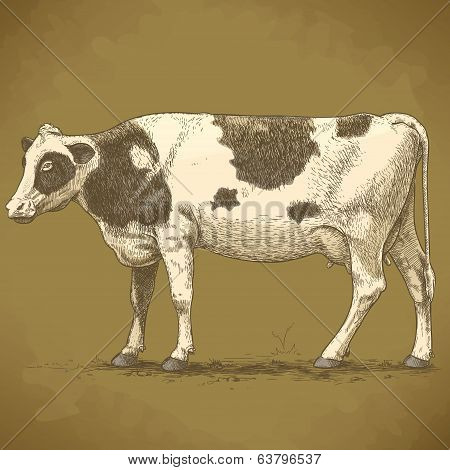 Vector Illustration Of Engraving Cow Retro