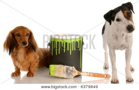 Dachshund And Jack Russel With Paint Can