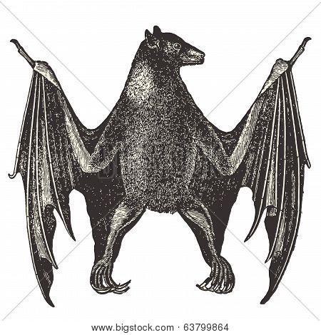Bat vintage - Vector