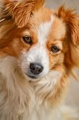 pic of cross-breeding  - Portrait of a cute cross - JPG