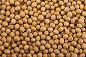 stock photo of soybean sprouts  - backkground of raw yellow soybean close up - JPG