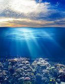 stock photo of sky diving  - sea or ocean underwater life with sunset sky - JPG