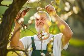 stock photo of spade  - Portrait of a handsome senior man gardening in his garden - JPG