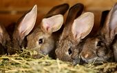 pic of rabbit hutch  - Young rabbit animal farm and breeding. Whole background.