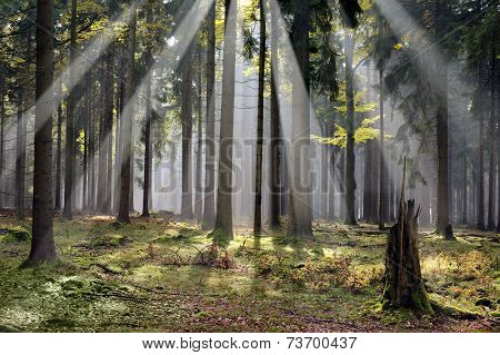 forest at morning