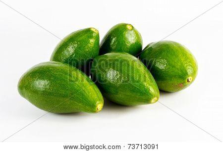 The Avocado Fruit