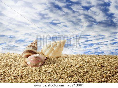 Shells On Sandy Beach With Sky.