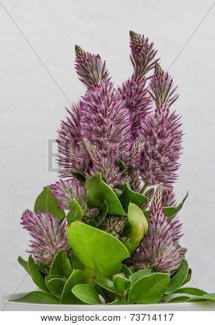 Flower pot with australian feather bush