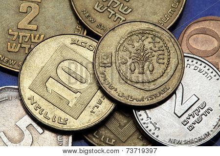 Coins of Israel. Replica of an ancient coin with lulav between two etrogim depicted in the Israeli 5 agorot coin.