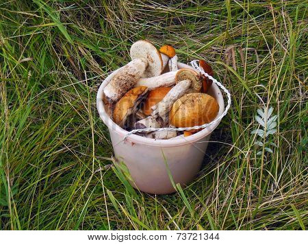 Bucket With Mushrooms
