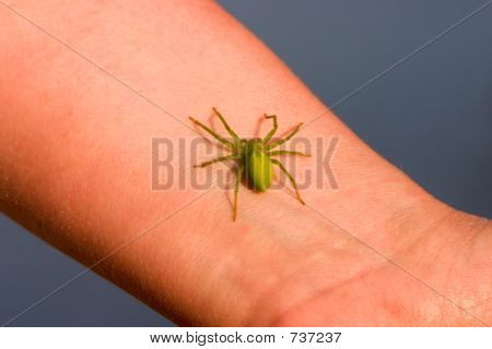 Green spider on a wrist