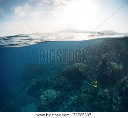 Split shot of the coral reef and sea surface with waves