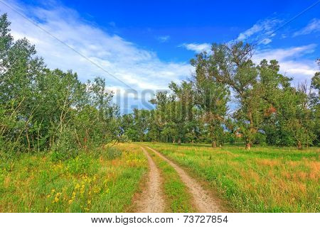 Rut road among meadow in summer forest