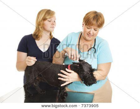 Female Vet Treats Patient