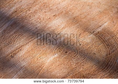 Tree Ring Background