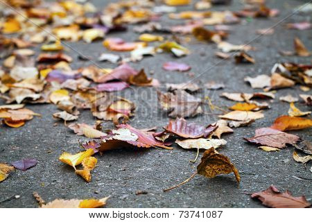 Fallen Autumnal Leaves Lay On Urban Asphalt Road