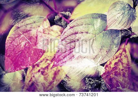 Original Colorful Nature Background. Bright Autumnal Leaves