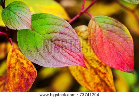 Fall Season Colorful Background. Bright Autumnal Leaves