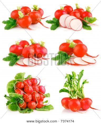 Set Fresh Red Radish Vegetables With Green Leaves