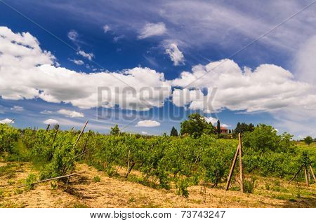 vineyard and Tuscany landscape, Toscana, Italy
