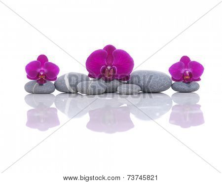 beautiful three red orchid with stones