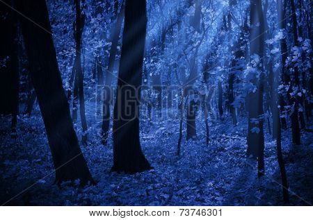Forest on a moonlit night