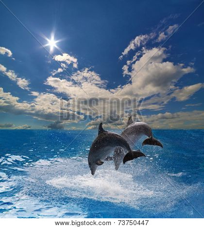 two grey dolphins jumping above blue water