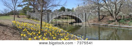 Bridge at the gardens