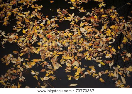 Motley Autumn Leaves On Water