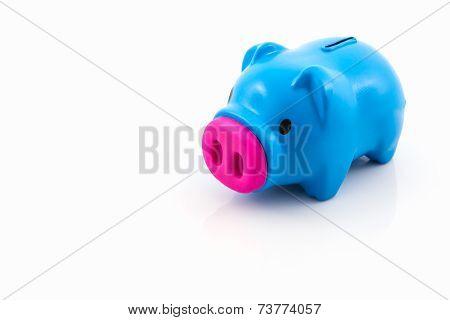Blue Piggy Bank Saving.