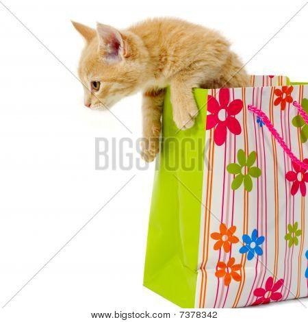 Gatinho e o saco de compras