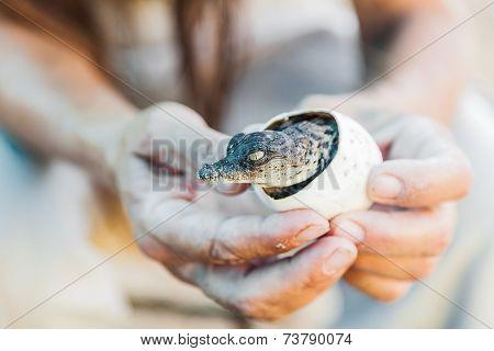 Birth Of Alligator