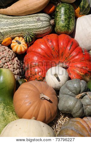 Colorful pile of pumpkins. Different shapes and colors