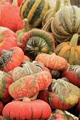 picture of turban  - Colorful array of Turks Turban Squash displayed at local farmers market - JPG