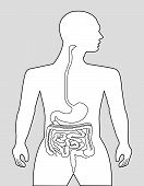 foto of gastrointestinal  - The gastrointestinal tract on a gray background - JPG