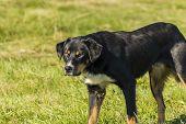 foto of irresistible  - An irresistibly cute black dog a close up  - JPG