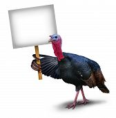 stock photo of symbol  - Turkey bird sign concept as a thanksgiving character symbol holding up with its wing a sign placard on a white background representing autumn celebration ans seasonal wildlife theme - JPG