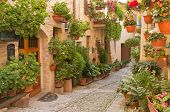 stock photo of street-art  - Street decorated with plants and flowers in the historic Italian city - JPG