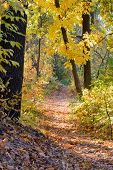 Постер, плакат: Sunny Autumn Forest