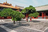 foto of lamas  - Courtyard of Lama temple in Beijing China with beautiful artificially shaped pines stylized and filtered to look like an oil painting - JPG