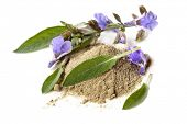 stock photo of purple sage  - Sage - JPG