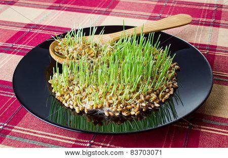 Germinated Grain