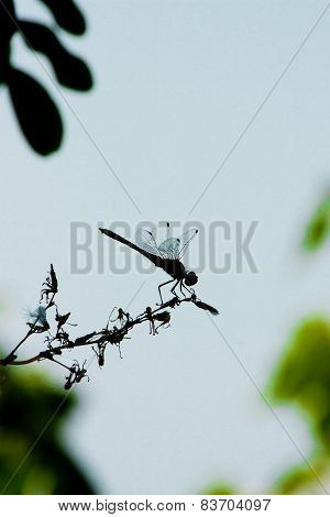Dragonfly Silhouette Over Summer Sky