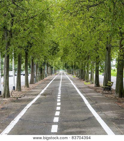 Vercelli, Cycling Lane