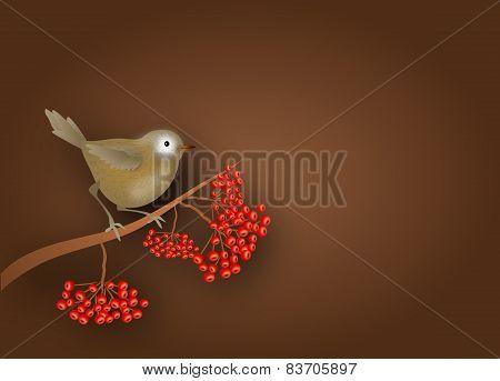 Brown Bird On Rowan Tree