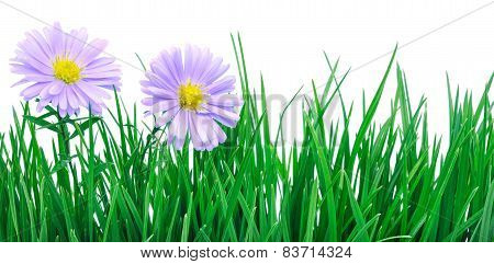 Flowers On Grass