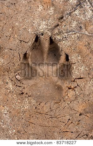 Dogs Single Paw Print On The Sand.