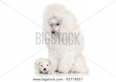 Mother And Puppy. Portrait On White Background