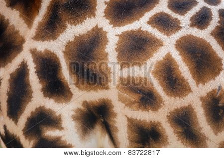 Giraffe Skin With Pattern